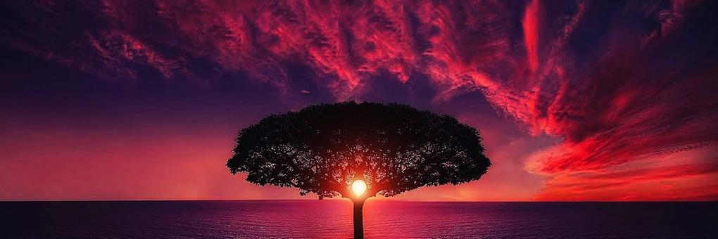 Baum - Sonne - Abendrot - In meine Mitte kommen