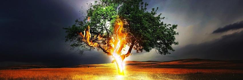Blitzeinschlag in Baum - Trauma